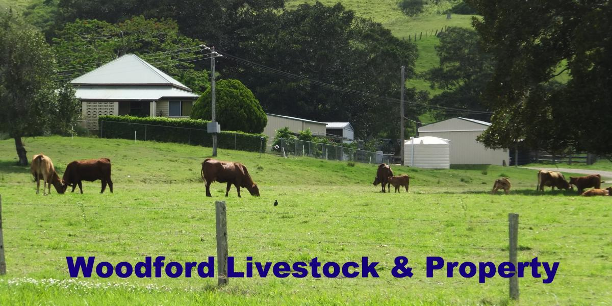 Mt Kilcoy - 473 Acres Grazing Property